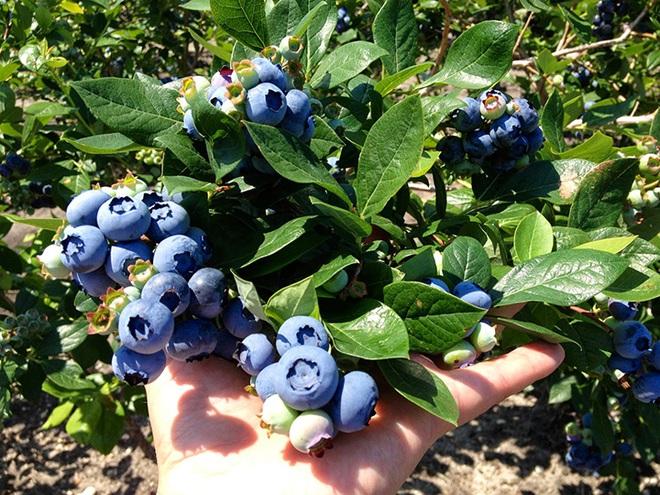 6 trái cây luôn có sẵn ngoài chợ cao tay giảm đường huyết, tốt cho cả người tiểu đường - Ảnh 3.