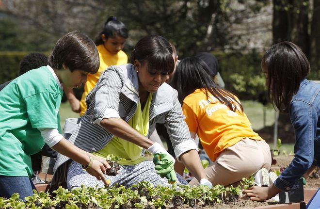 Loại cây được ví là sâm nam của VN có trong vườn nhà Obama - Ảnh 9.