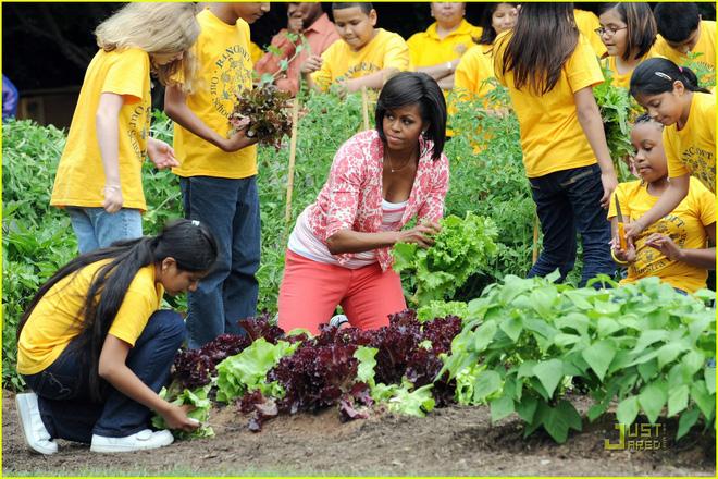 Loại cây được ví là sâm nam của VN có trong vườn nhà Obama - Ảnh 10.