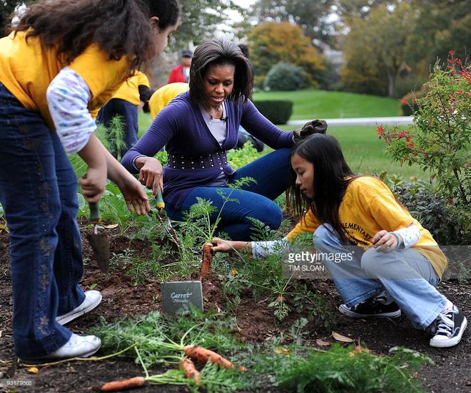 Loại cây được ví là sâm nam của VN có trong vườn nhà Obama - Ảnh 14.