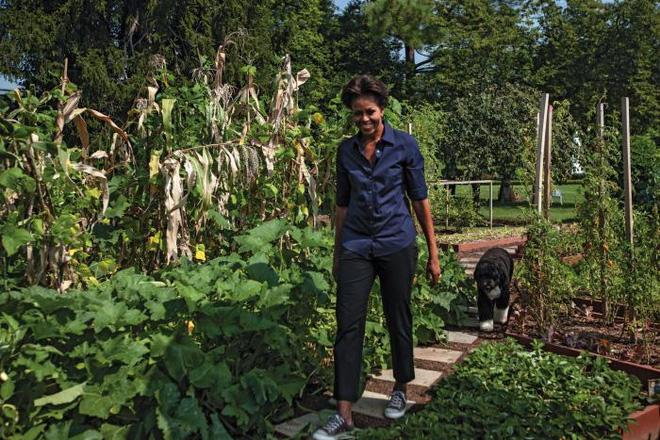 Loại cây được ví là sâm nam của VN có trong vườn nhà Obama - Ảnh 18.