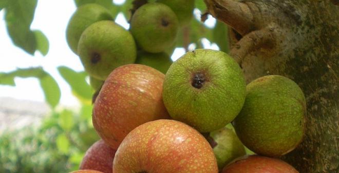 5 trái cây tốt nhất làm tăng hiệu quả chữa trị bệnh ung thư