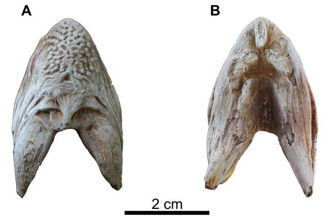 Phát hiện loài cá mới giống cá trê nhưng dài tới 2m tại sa mạc Ai Cập - Ảnh 2.