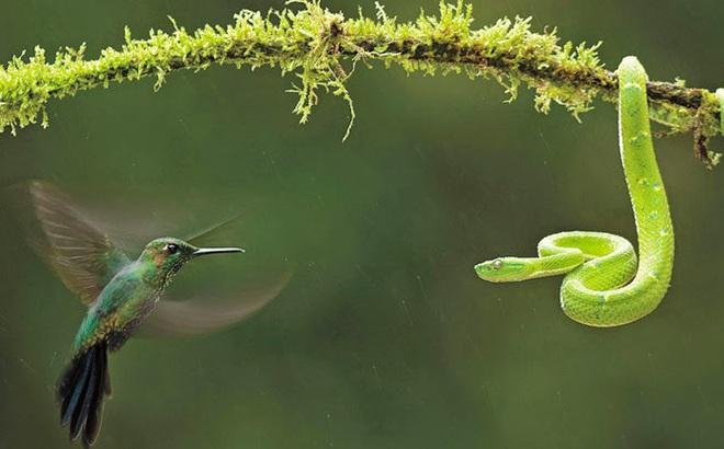 Chim ruồi đánh rắn: 5 bài học đọc xong ai cũng nhớ, điều thứ 4 dành cho gia đình bạn!