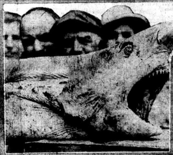 Nỗi sợ cá mập từng bao trùm nước Mỹ: Hai tuần 5 người gặp nạn, chỉ 1 người sống sót - Ảnh 5.