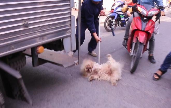 Dẫn chó cưng đi chợ không rọ mõm, người dân bất ngờ khi bị Đội săn bắt chó TP HCM hốt về - Ảnh 3.