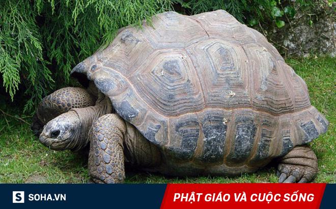 Làm một việc giúp con rùa già, người ăn mày không ngờ có thể đổi đời nhanh đến vậy!