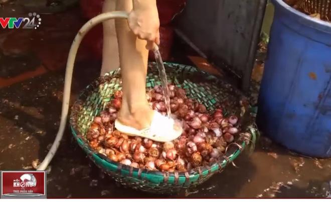 Rợn người công nghệ sản xuất hành phi bẩn từ khoai tây mọc mầm, hành tây thối - Ảnh 1.