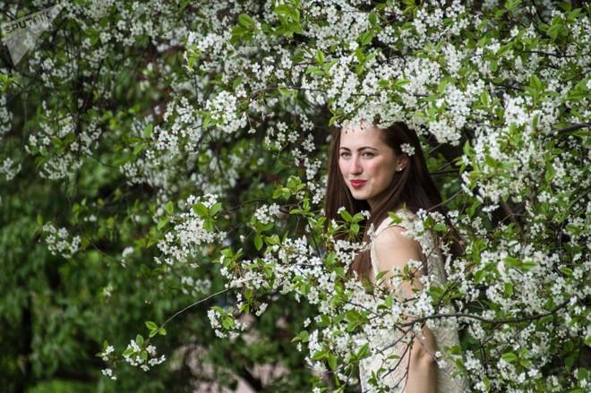 24h qua ảnh: Thiếu nữ Nga rạng rỡ giữa vườn hoa táo - Ảnh 4