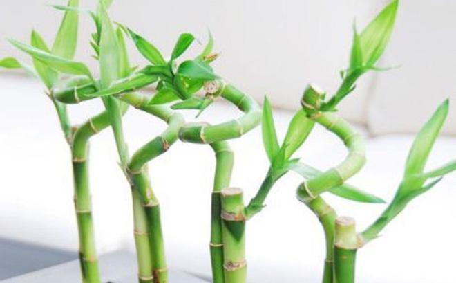 5 loại cây phong thủy