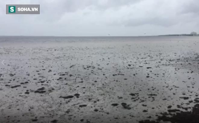 Siêu bão Irma rút cạn nước Vịnh Tampa, Mỹ. Ảnh: Fox News