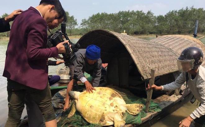 """""""Cụ rùa"""" hơn 5 yến mắc lưới ngư dân ở Hà Tĩnh trong đêm"""
