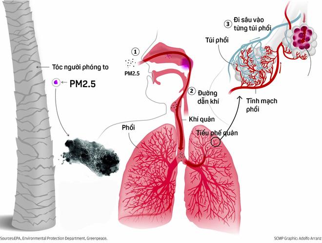 Cơ chế xâm nhập vào máu gây ung thư của bụi siêu độc PM2.5 chứa trong không khí Hà Nội - Ảnh 6.