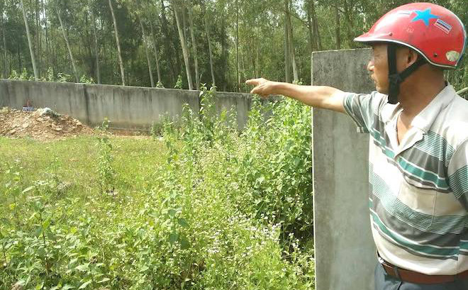 Ra mộ đốt vàng mã, 20 người trong gia đình bị cả ngàn con ong tấn công