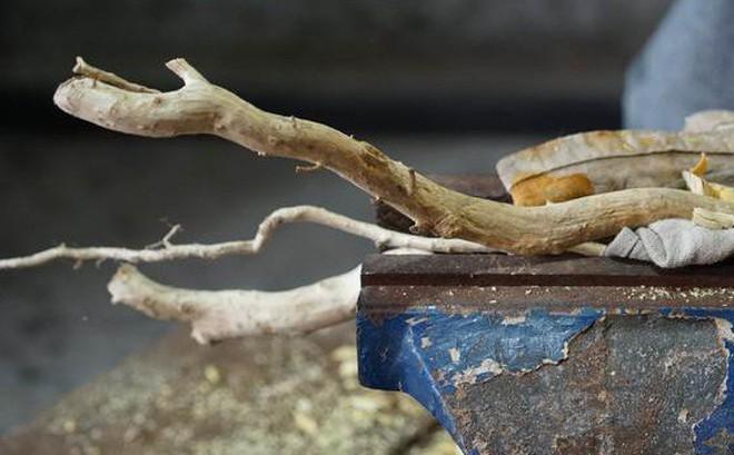 Chỉ là cành gỗ bỏ đi, qua tay chàng trai 8X, lập tức đội giá lên gần 600 triệu đồng