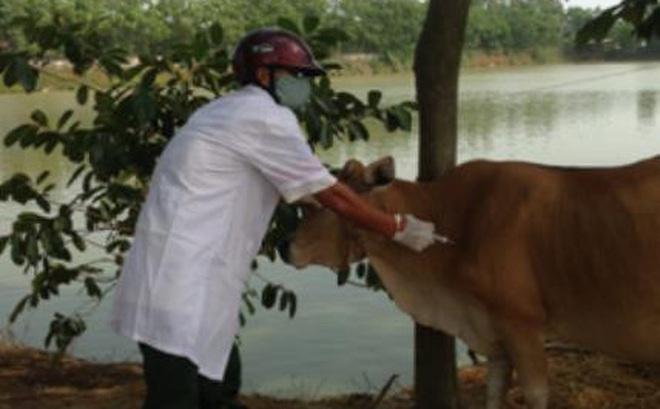 Cán bộ thú y ở Thanh Hoá dùng kim tiêm trâu đâm trưởng thôn 3 phát