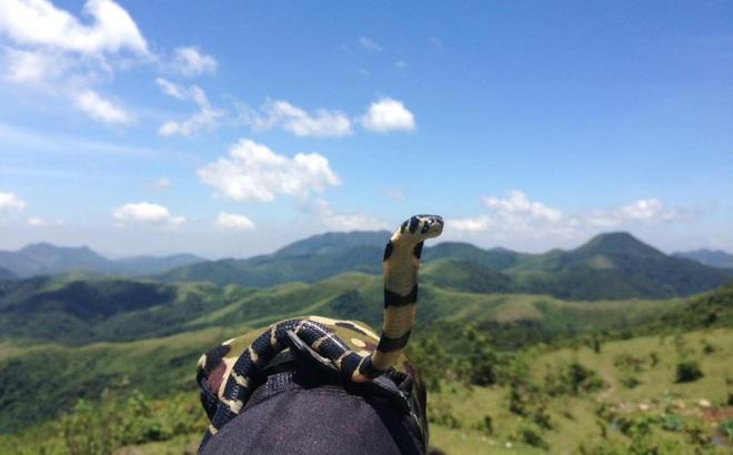 9x Hạ Long mang rắn hổ mang đi phượt khiến dân mạng Việt xôn xao
