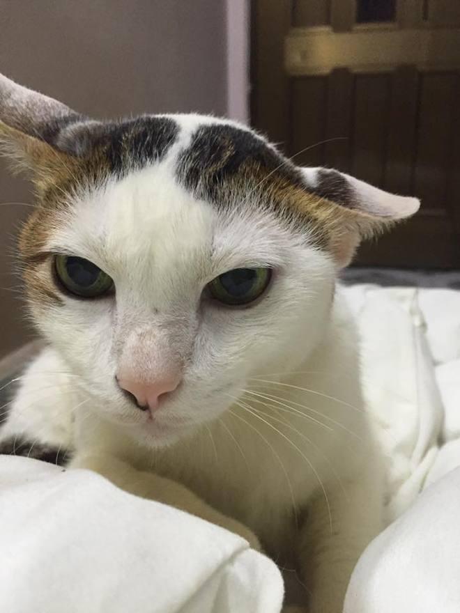Câu chuyện về chú mèo 20 tuổi ở Long An khiến bao người cảm động - ảnh 6