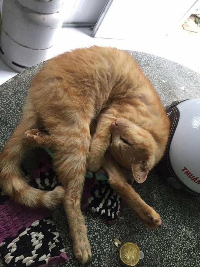 Câu chuyện về chú mèo 20 tuổi ở Long An khiến bao người cảm động - ảnh 3