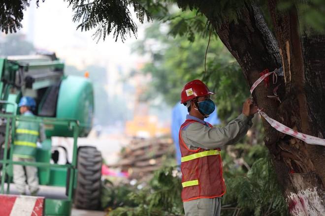 Hà Nội bắt đầu chặt hạ, di dời 130 cây xanh cổ thụ trên đường Kim Mã - Ảnh 16.