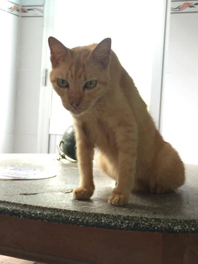 Câu chuyện về chú mèo 20 tuổi ở Long An khiến bao người cảm động - ảnh 5