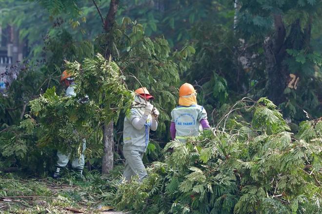 Hà Nội bắt đầu chặt hạ, di dời 130 cây xanh cổ thụ trên đường Kim Mã - Ảnh 15.