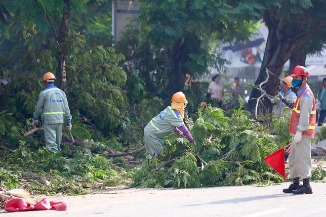 Hà Nội bắt đầu chặt hạ, di dời 130 cây xanh cổ thụ trên đường Kim Mã - Ảnh 13.