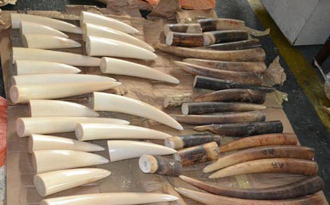 Phát hiện 41kg ngà voi gửi qua đường bưu điện về Việt Nam