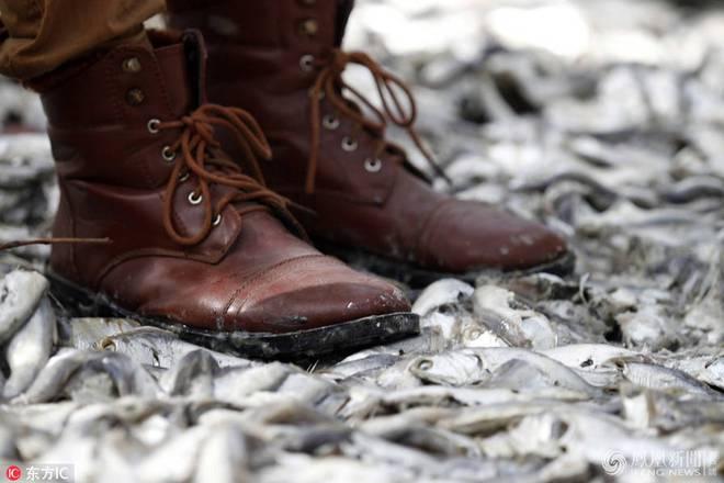 Chùm ảnh: Hiện tượng lạ khiến 1 loài cá bất ngờ chết hàng loạt tại 4 quốc gia - Ảnh 3.