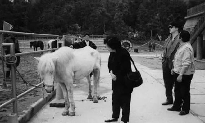 Cái kết thê thảm của chú ngựa Bạch Long Mã phim Tây Du Ký bản 1986 (P2) - Ảnh 7.