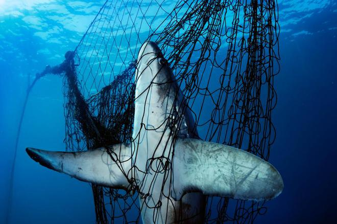 Nỗi sợ cá mập từng bao trùm nước Mỹ: Hai tuần 5 người gặp nạn, chỉ 1 người sống sót - Ảnh 2.