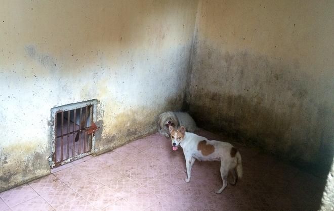 Dẫn chó cưng đi chợ không rọ mõm, người dân bất ngờ khi bị Đội săn bắt chó TP HCM hốt về - Ảnh 11.