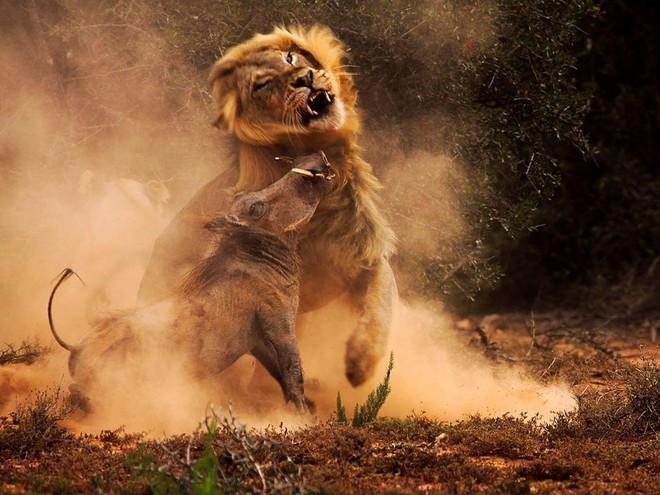 Bầy sư tử cuồng dại, giết chết 1.500 người: Vụ động vật thảm sát nhiều người nhất lịch sử 4