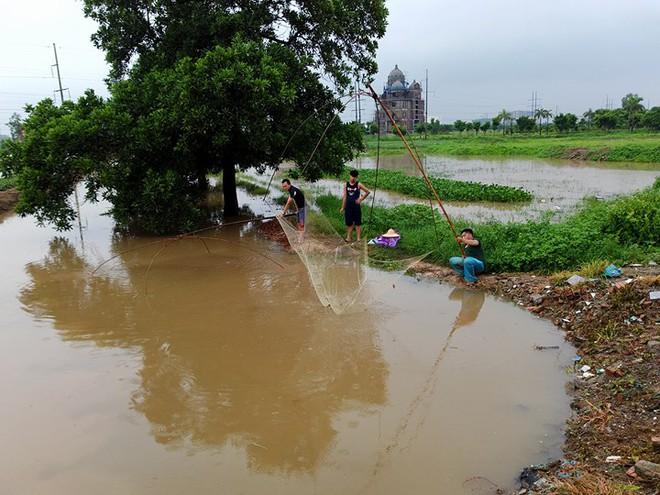 Người dân đổ xô đi bắt cá sau mưa lớn ở Hà Nội - Ảnh 1.