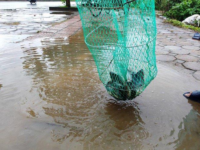 Người dân đổ xô đi bắt cá sau mưa lớn ở Hà Nội - Ảnh 8.