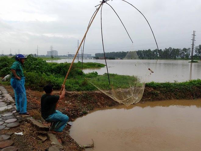 Người dân đổ xô đi bắt cá sau mưa lớn ở Hà Nội - Ảnh 3.