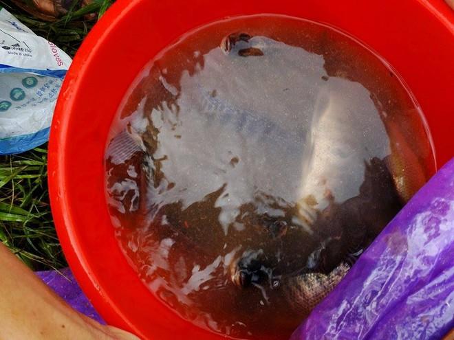 Người dân đổ xô đi bắt cá sau mưa lớn ở Hà Nội - Ảnh 6.