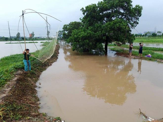 Người dân đổ xô đi bắt cá sau mưa lớn ở Hà Nội - Ảnh 4.