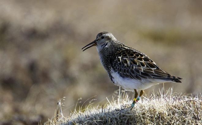 """Khoa học tuyên bố: Đây mới chính là loài chim """"điên tình"""" nhất thế giới"""