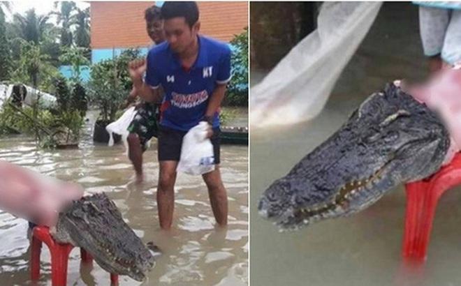 Thái Lan: Mặc kệ mưa lũ, người dân vô tư xẻ thịt cá sấu sổng chuồng giữa dòng nước
