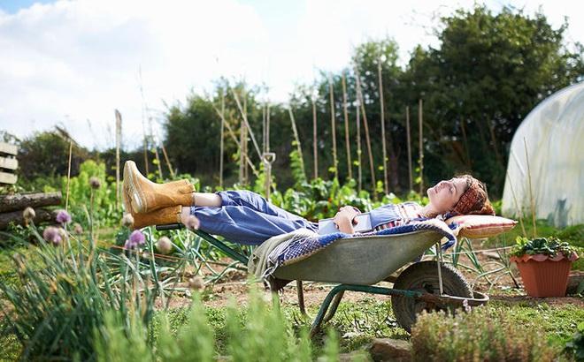 7 lý do khiến những người làm vườn hạnh phúc hơn nhiều nghề khác