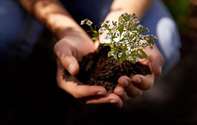 7 lý do khiến những người làm vườn hạnh phúc hơn nhiều nghề khác - Ảnh 3.