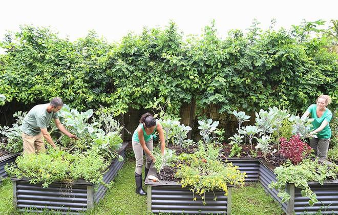 7 lý do khiến những người làm vườn hạnh phúc hơn nhiều nghề khác - Ảnh 5.