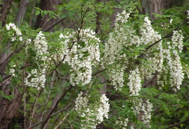 5 loại cây phong thủy hút tài lộc vào nhà được nhiều gia đình chọn mua trong dịp Tết - Ảnh 3.
