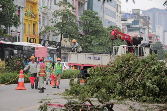 Hà Nội bắt đầu chặt hạ, di dời 130 cây xanh cổ thụ trên đường Kim Mã - Ảnh 9.