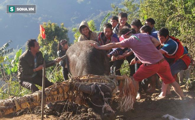 """Chính quyền Quảng Nam nói """"khó cấm"""" tục đâm trâu"""