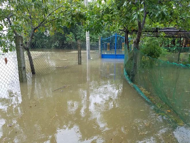 Họp khẩn trước giờ khai mạc APEC, Bí thư Đà Nẵng: Đang họp mà bị dột nước thì đẹp mặt! - Ảnh 4.