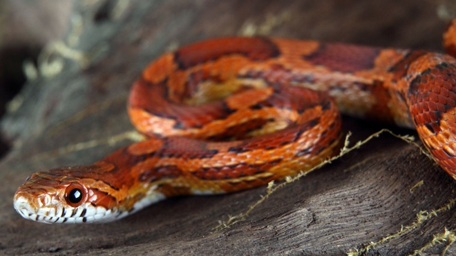 Sinh tồn và những điều chúng ta cần học từ động vật - Ảnh 4.