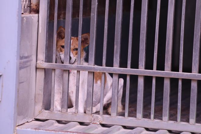 Dẫn chó cưng đi chợ không rọ mõm, người dân bất ngờ khi bị Đội săn bắt chó TP HCM hốt về - Ảnh 10.