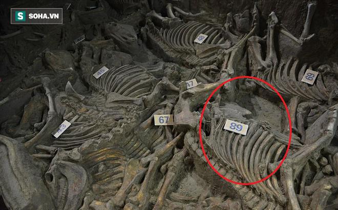Bí ẩn cổ mộ 2.400 năm chứa hơn 100 xác ngựa ở Trung Quốc